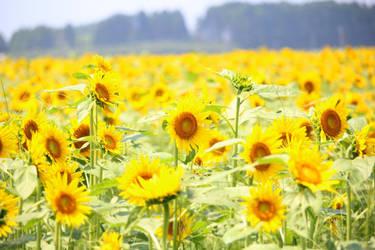 Japanese Summer 2015 - 18 by caffinefreek