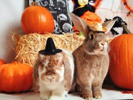 Halloween Bunnies by balba-bunny