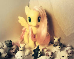 Fluttershy's Doggy Store by MidnightRarity