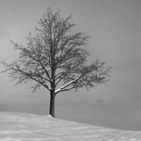 alone by SlmnDln
