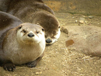 Otterly Adorable by planeteleven