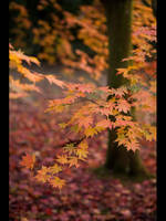 Colour of Autumn by GMCPhotographics
