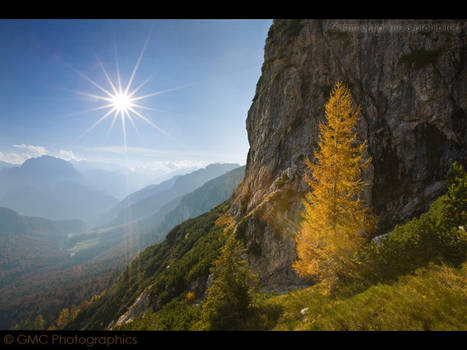 Yellow Larch of Ingress Pass by GMCPhotographics