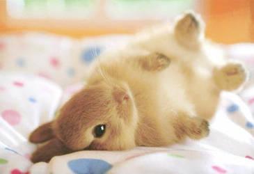 Bunny by CloudySkyCupcake