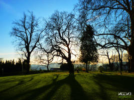 The Tree by Nigeno