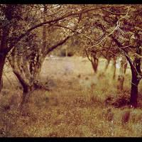 Nature everywhere by CasheeFoo