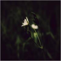 some light by CasheeFoo