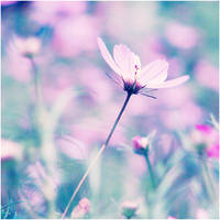 Softness by CasheeFoo