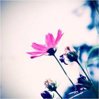 Pink, pink, pink... by CasheeFoo