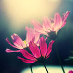 Sharp Flower by CasheeFoo