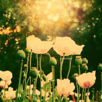 White Flowers by CasheeFoo