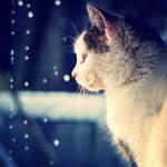 Observe thaw by CasheeFoo