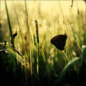 Little Black Butterfly by CasheeFoo