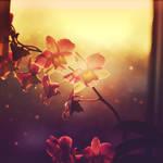 Morning stars by CasheeFoo
