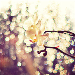 With you rain is beautiful by CasheeFoo
