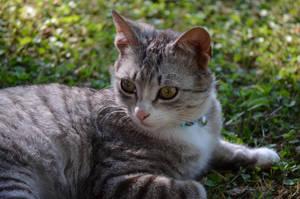 Figaro :3 _1_ by CharlieBlack0