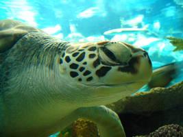 Sea Turtle by k4tt