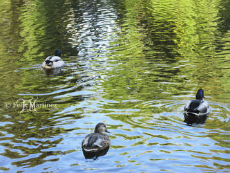 Swimmin Home by darkprinsess