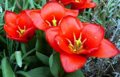 Pollination by ancoben