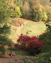 Autumn walks @ Winkworth by ancoben