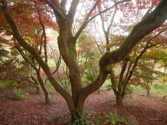 Red canopy by ancoben