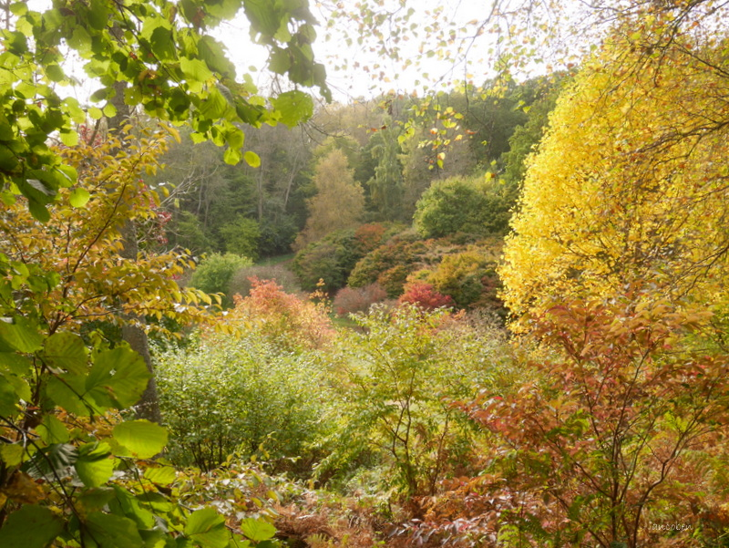 Autumn trees @ Winkworth by ancoben