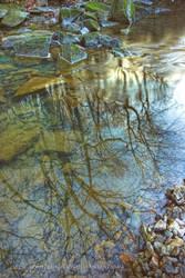 Gans Creek Reflection by Jacob-Routzahn