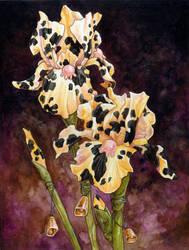 Holstein Iris Redux by ursulav