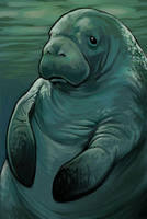 Manatee Card by ursulav
