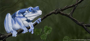 Alternate Frog I by ursulav