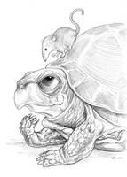 Turtle Talk by ursulav