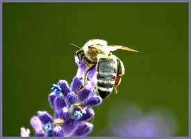 a bee by mirtek