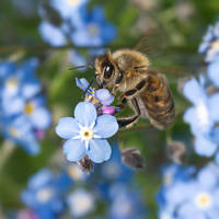 Bees and flowers XII by starykocur