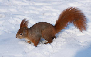 Squirrels and snow II by starykocur