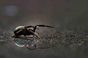 Rainbow Spider by Aztil