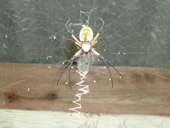 Argiope Spider Stock 3013 by LonelyWolfSpirit