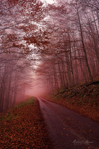 Red Evening by r-maric