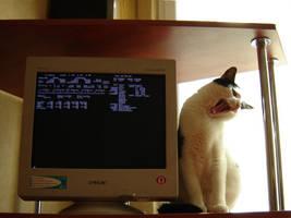 FreeBSD Beast by vermaden