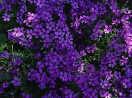 Deep Purple by vermaden