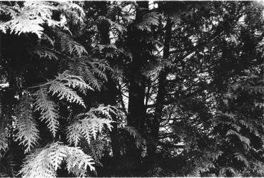 Dark Forest by BlueFlamedPhoenix