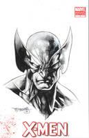 Wolverine sketch by sjsegovia
