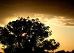 oaken sunset 2 by graphic-rusty