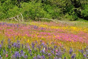 wildflower meadow 4 by DarkBeforeDawn23