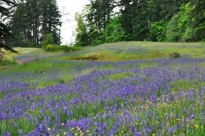 wildflower meadow 9 by DarkBeforeDawn23