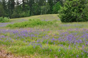 wildflower meadow 10 by DarkBeforeDawn23