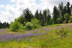 wildflower meadow 11 by DarkBeforeDawn23