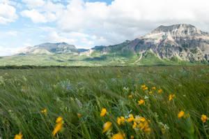 Alpine Meadow 9 by DarkBeforeDawn23