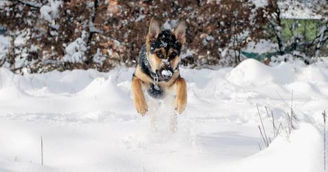 SnowPlow Dog by damir-g-martin