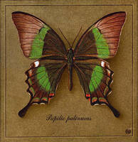 Butterfly 4 by INDRIKoff