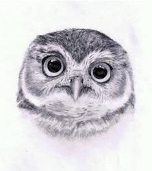 Burrowing Owl... Hoot by joanna--banana